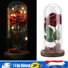Rose Éternelle sous Cloche Rouge Rose LED Anniversaire Fête Déco Lampe FR