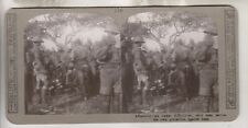 Wwi British Stereoview - Afternoon Tea Under Difficulties Of Bees