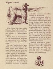 Afghan Hound - Vintage Dog Art Print - 1954 M. Dennis