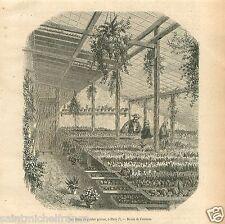 Serre de Plantes Grasses Cactus Paris France GRAVURE ANTIQUE OLD PRINT 1857