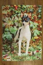 """Rat Terrier Dog Breed, Farming / Hunting Dogs, decorative House Flag 28"""" x 40"""""""