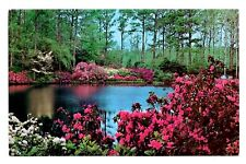 Azalea Gardens Postcard Florida Water Flowers Trees Landscape Vintage