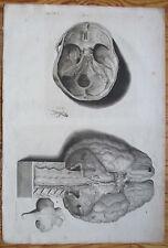 Cowper Bidloo Huge Impressive Engraving Anatomy Brain Skull - 1737