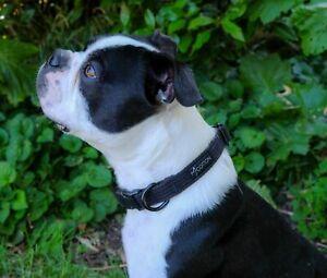 Dog Puppy Collar Soft Adjustable Durable Non Abrasive 3 Sizes/ 4 Colours Cotton