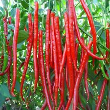 200pcs Long line pepper Seeds Delicious vegetables