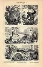Old print animal habitat nest 1908 dierwoning dier