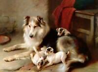 Vintage 1970/'s Walter Chandoha Collies Collie Puppies Poster
