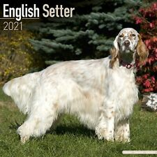 English Setter Calendar 2021 Premium Dog Breed Calendars