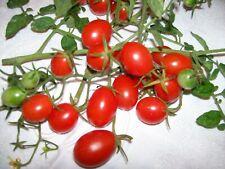 25 graines de tomate cerise olivette rouge bio