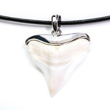 27-29 mm Bull shark tooth refined 925 silver capping flawless perfect A++ s10