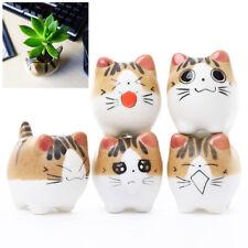 Cat Succulent Planter 5 Pcs Mini Cat Pots for Small Plants Home Office Decor