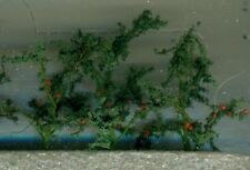 "Tomato Plants 1-1/2"" Tall 12 Pack Flowering Plants O Scale JTT Scenery Products"