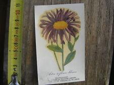 Chromo Decoupi LANVIN sticker decalcomanie FLEUR Aster a fleurs bleues
