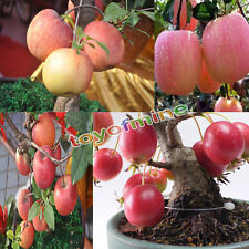 20Pcs Bonsai Apple Tree Seeds Garden Yard Outdoor Fruit Plant Fascinating Seeds