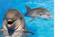 Delfin Delphin Cow Tier Magnet 3 D Tiefenoptik 9 cm Kühlschrank Souvenir,Neu