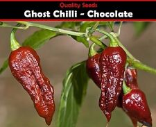 Chilli Pepper Chocolate Bhut Jolokia  Ghost Chilli Seeds 100% GENUINE, UK SELLER
