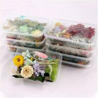 1Box Dried Flowers For Art Craft Epoxy Resin Candles Wedding Decor DIY Gift Q5T1
