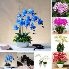 IG_ KF_ 100Pcs Orchid Seeds Flower Plant Office Home Ornament Garden Window Bons