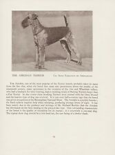 AIREDALE TERRIER OLD VINTAGE 1934 NAMED DOG PRINT PAGE