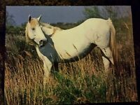 Pferdepostkarte, AK Pferde, Pferdepostkarten