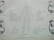 ANTIQUE PRINT C1870'S CIRCULATION OF THE BLOOD ENGRAVING MEDICAL BIOLOGY ETCHING