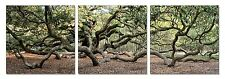 """47"""" FRAMED Hot Modern Contemporary Canvas Wall Art Print Painting Forest Trees"""