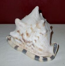 Vintage 6.5 inch Queens Helmet CONCH SHELL ^