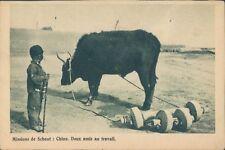 CHINA Belgian mission bullock farming 1930s PC