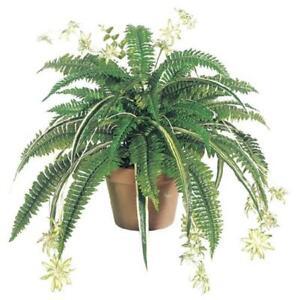 32 Inch Silk Mixed Boston Fern-Spider plant x48 - Green - Qty of 6