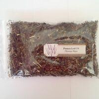 1 oz. Plantain Leaf C/S (Plantago Major) <28 g / .063 lb> Dried
