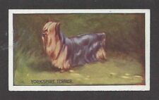 1926 George Vernon Stokes Dog Art Sanders Custard Jelly Card YORKSHIRE TERRIER