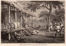 IMAGE 1872 PRINT INDONESIE INDONESIA AMBOINE AMBON EXPULSION SERPENT SNAKE BOA