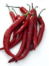 "Cayenne Pepper Seeds- Italian ""Cayenna"" Heirloom- 50+ Seeds"