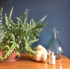 Vintage Large Retro Green Glass Terrarium Carboy Bottle Garden Botanical Boho