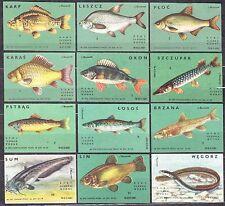 POLAND 1966 Matchbox Label - Cat.Z#664/75 II,III,V set, Freshwater fish.