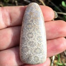 Fossilized Coral Cabochon oblong oval freedorm grey flowers light colored