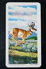 Pronghorn Antelope       Illustrated Card   VGC