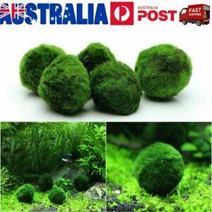 2-5Pcs Marimo Moss Ball Cladophora Live Aquarium Plant Fish Aquarium Decor 3-4cm