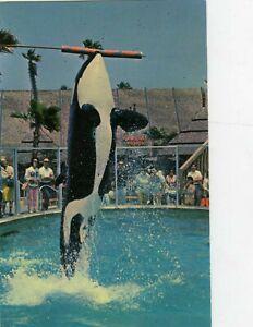 Sea World Shamu San Diego California Vintage Postcard