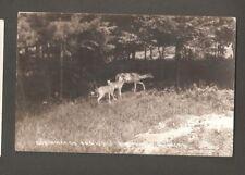 Vtg RPPC Postcard Northwoods Family Deer Northern Michigan MI 1939