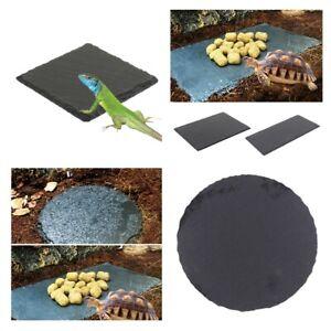 Reptile Turtle Rock Basking Platform Tortoise Horned Frog Rock Feeding Dish Bowl