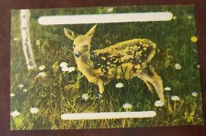 Blank Deer Woodlands Vintage Postcard linen style