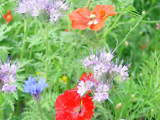1 kg Schmetterlingswiese Blumenwiese Blumenmischung Wildblumen Blumen Mischung