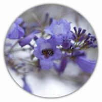 Palisanderbaum / Jacaranda mimosifolia / Bienenfreundlich / 50 Samen
