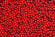 Red Chirmi Goonja Gunja Gurivintaa Ratti Abrus Precatorius Rosary Pea 51 Seeds