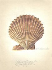 Ocean Seashell NOBLE SCALLOP original SIGNED limited edition handworked Giclee