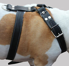 "High Quality Leather Walking Dog Harness 33""-37"" chest 1.5"" Rottweiler Mastiff"
