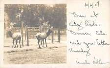 Denver Colorado City Park Deer Real Photo Antique Postcard K27633