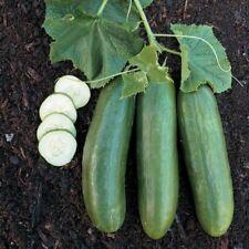 """""""BEST ON EBAY"""" 25 CUCUMBER SEEDS - STRAIGHT 8 - FRESH NON-GMO GARDEN VEGETABLE"""