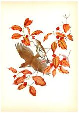 Wood Thrush Print by Athos  Menaboni - Book Plate - Vintage Wall Hanging